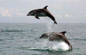 dauphins-vauville
