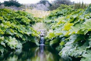 jardin-botanique-de-vauville-22-700x467